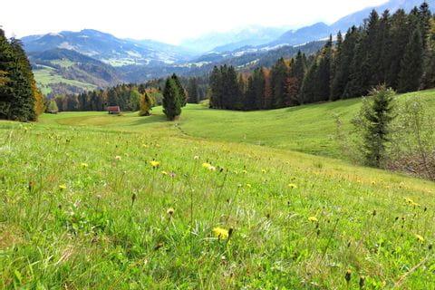 Blumenwiese im Bregenzerwald