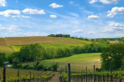 Leuchtend grüne Felder in der Weinregion Chianti