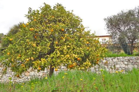 Obstbäume mit regionalen Früchten neben Wanderwegen