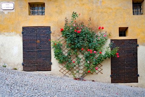 Mauer mit Holztüren und Rosen