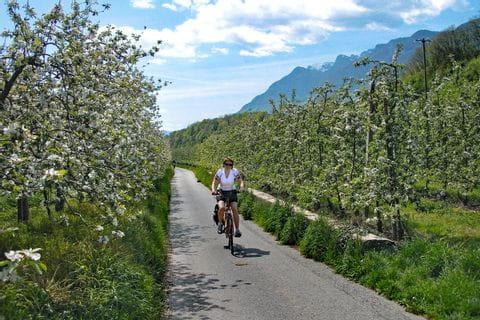 Blühende Apfelbäume in Südtirol