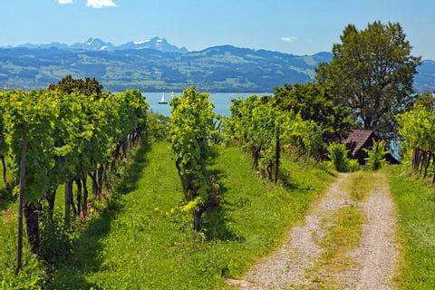 Radweg in den Weinbergen nahe Lindau am Bodensee