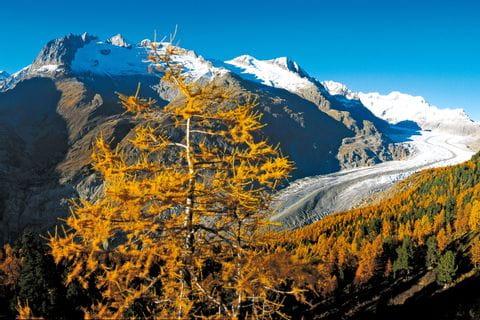 Größter Gletscher der Alpen