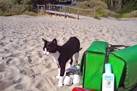 Katze mit Satteltasche am Strand