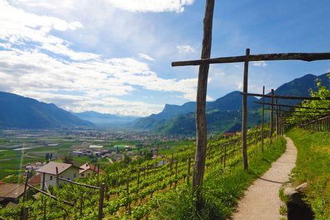 Traumhafte Walwege führen durch die Südtiroler Weingärten