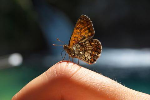 Farbenprächtige Schmetterlinge