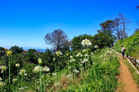 Blumenpracht entlang der Levada Wanderwege