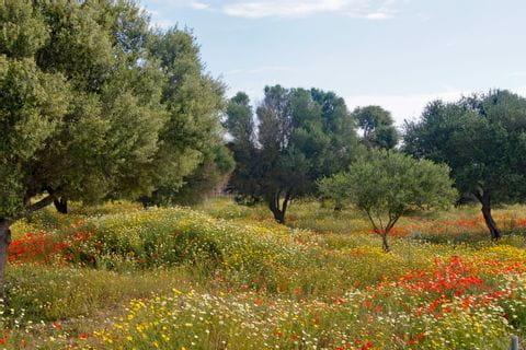 Blumenwiese mit Bäumen