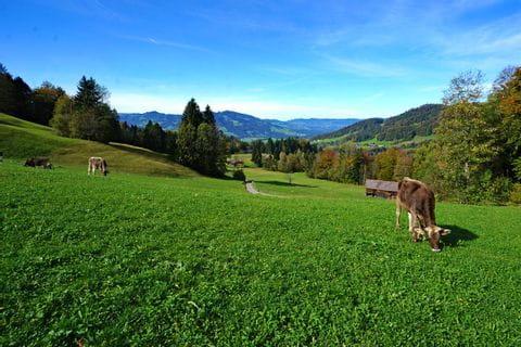 Ruhiges Bergleben in Vorarlberg