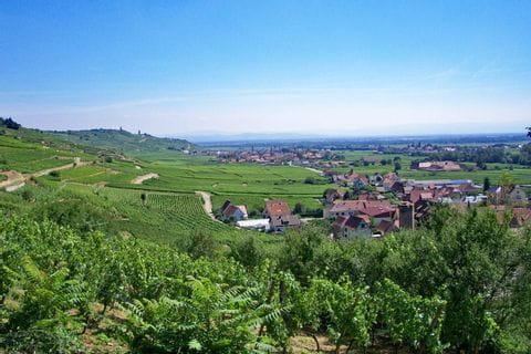 Traumhafter Ausblick auf die Weinfelder während der Wanderung