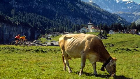 Alpenpanoramaroute(GontenAppenzell)-Switzerland-Tourism-By-Line-swiss-image