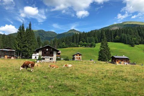 Grasende Kühe neben den Hütten im Val Visdende
