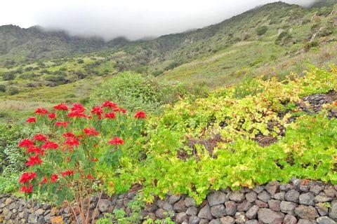 Beeindruckende Flora und Fauna auf der Wanderreise El Hierro