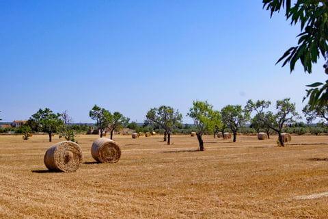 Feld mit Bäumen und Strohballen