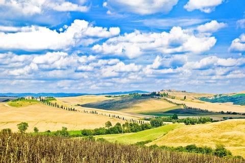 Blauer Himmel und gelbe Felder