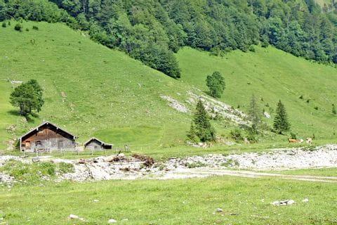 Weidende Kühe auf der Alm