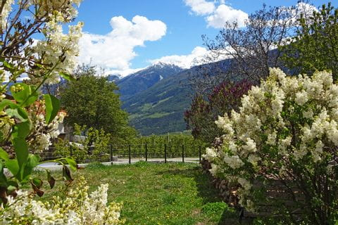 Panoramaweg durch Weingärten