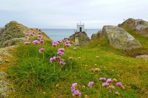 Blumenwiesen und Aussichtspunkt beim Wandern in Saint Peter Port