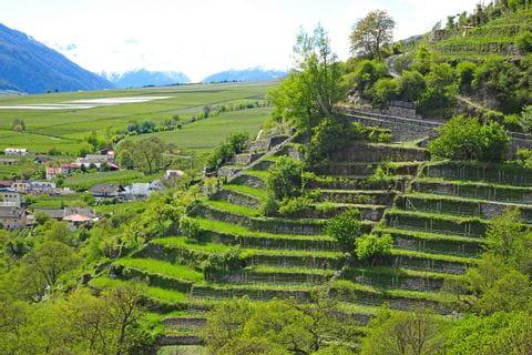 Wanderpanorama im Vinschgau mit Blick auf die Weinterrassen