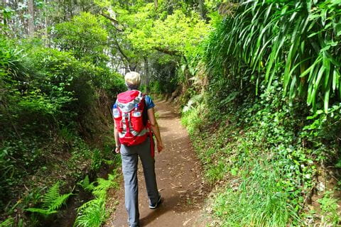 Hiking along flowering Levada trails