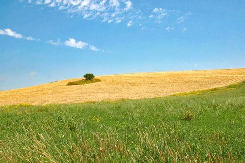 Typical landscape of Sicily