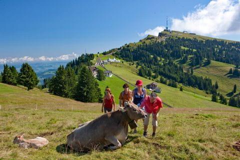 Familie wandert vorbei an der Kuh