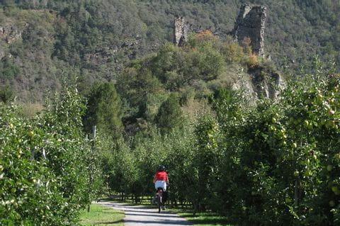 Radler auf dem Weg durch die Obstbäume im Vinschgau