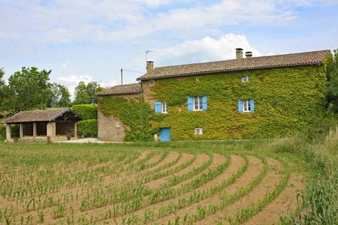Weinreben bewachsenes Haus