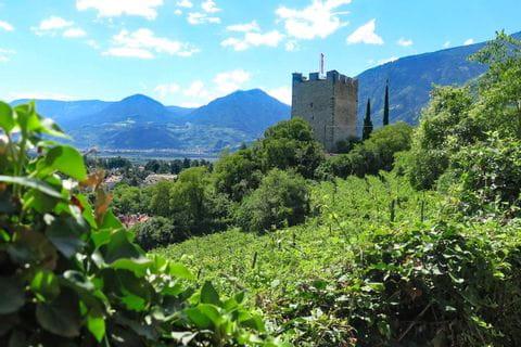 Blick auf die Burg Dornsberg in Naturns