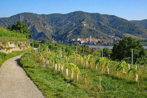 Wanderwege mit Blick auf Weinberge und der Burgruine Dürnstein