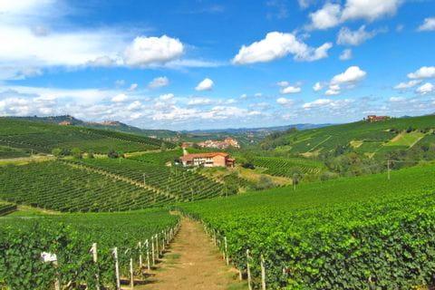 Bezaubernde Weinberge im Piemont
