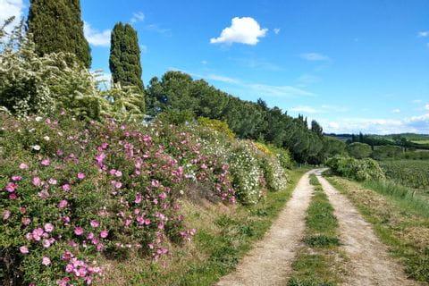 Bunte Pflanzen schmücken den Wanderpfad der Via Romea