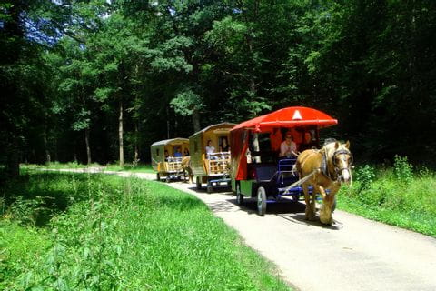 Gruppenfahrt mit dem Zigeunerwagen durch das Elsass