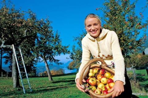 Frau mit Korb voller Äpfel bei der Ernte