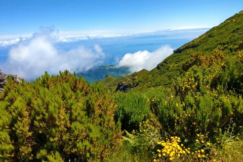 Üppige Vegetation auf Madeiras Hochgebirge Paul da Serra