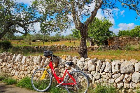 Radweg entlang der typischen majorquinischen Steinmauer