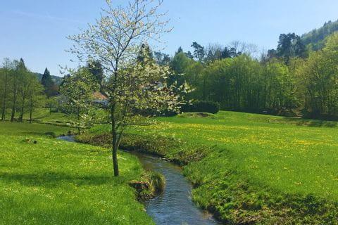 Wandern am Bach durch die schöne elsässische grüne Landschaft