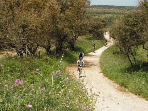 Radfahrer zwischen Olivenbäumen