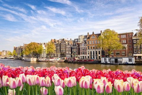 View of Amsterdam in the flower field
