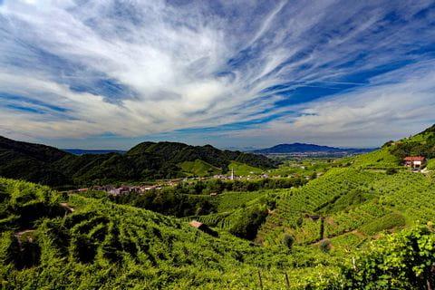 Wunderschöner Blick auf die Weinberge