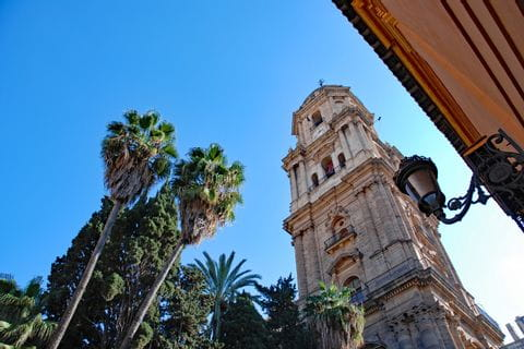 Cathedral of Malaga with palm trees
