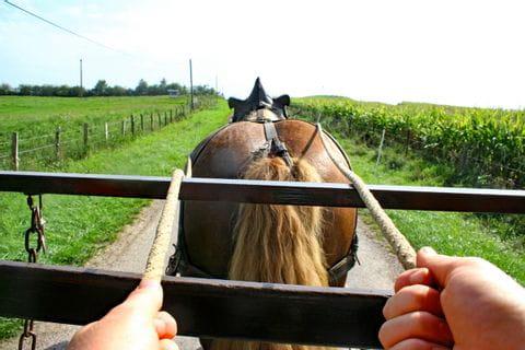 Blick über den Pferderücken in die Landschaft im Elsass