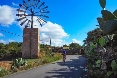 Radfahrer zwischen Feigenkaktus und Windmühle