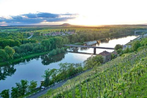 Weinberge entlang der Elbe