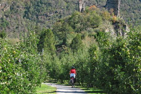 Radfahrer zwischen Apfelbäumen
