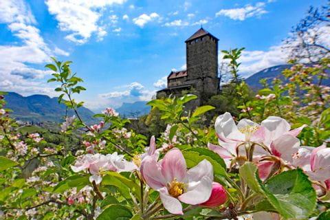 Flora und Fauna in Südtirol