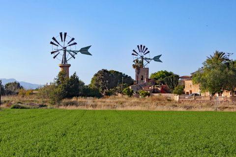 Windräder und grünes Feld