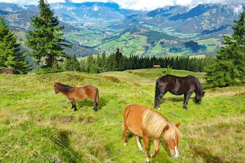 Pferde auf den Pinzgauer Grasbergen