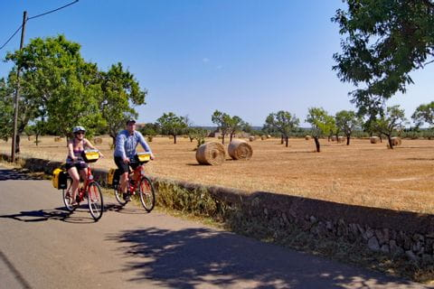 Radfahrer vor Feld