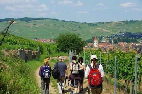 Schöne Wanderwege durch die Weinberge